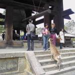 Templi di Nara. Campana con batacchio esterno e l'immancabile cerbiatto in cerca di biscotti.
